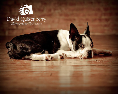mckinney tx dog portraits