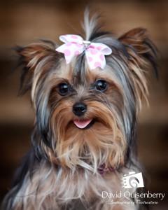 Mckinney, TX Artistic Dog Portraits