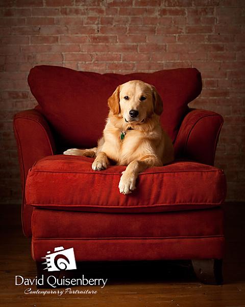 mckinney, TX dog portraits title=