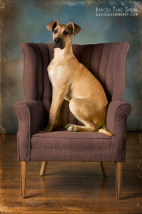 pet pictures by david quisenberry