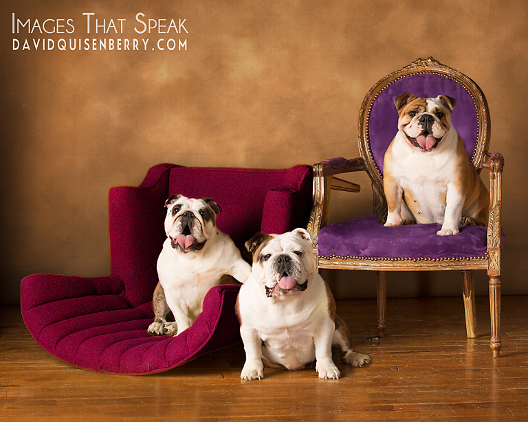 plano pet portraits