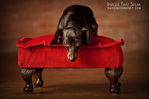 award winning pet photography